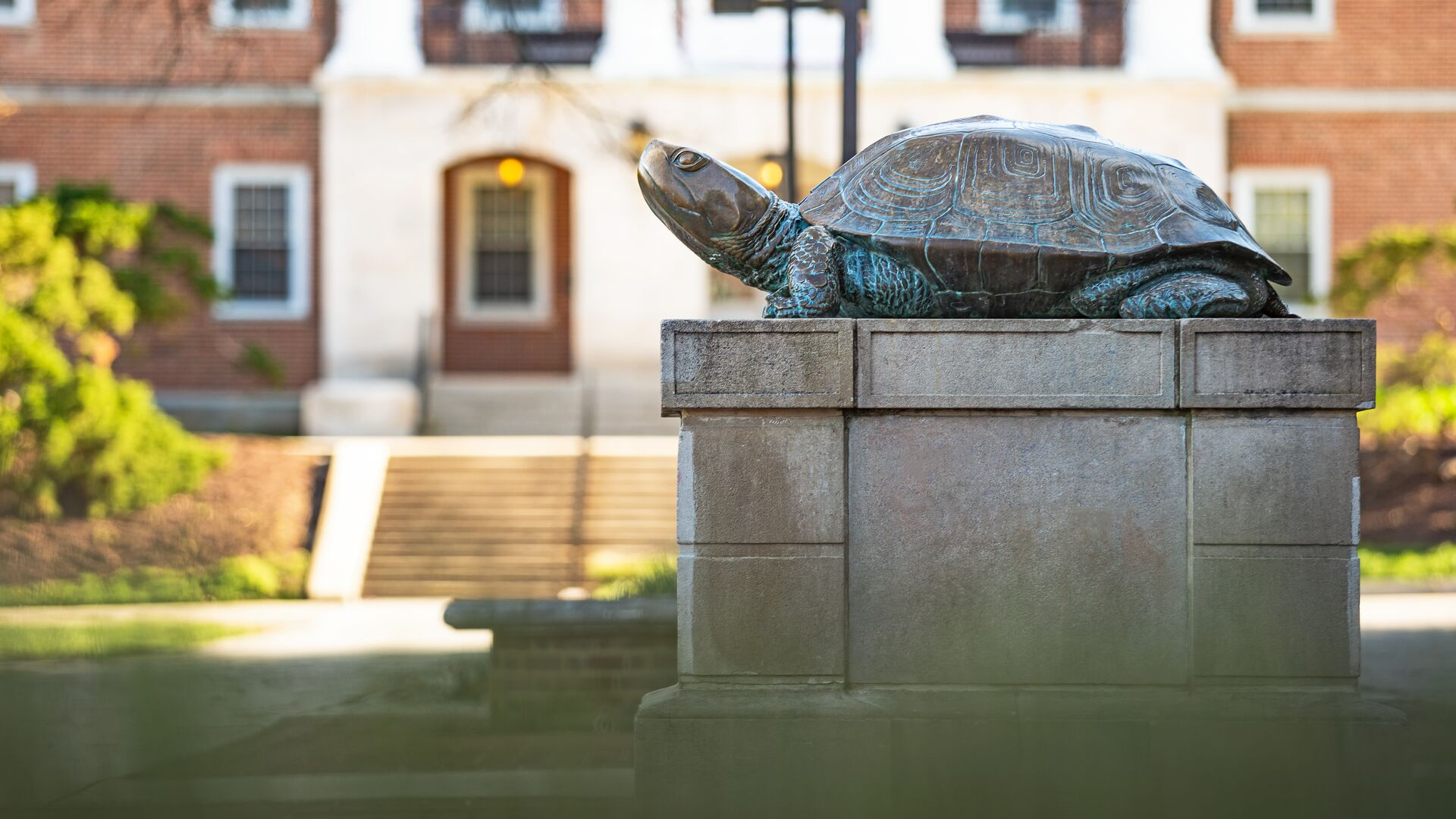 Testudo statue in front of McKeldin Library.