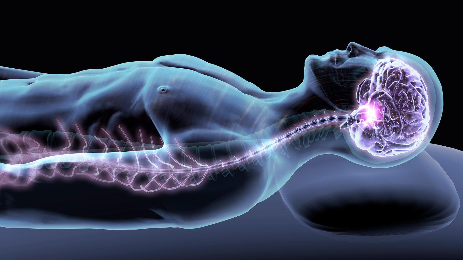 UMD-UMB Study Examines Link Between Spine Injury and Cognitive Decline